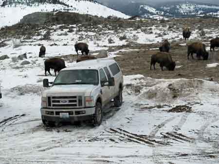 truck_buffalo.jpg