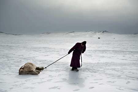 Mongolia Cold