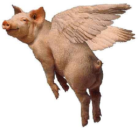 pig-fly.jpg