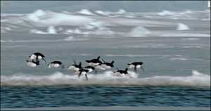 flying_penguins_01.jpg