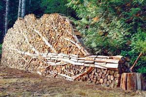 marco_folio_march_08_2_woodpile.jpg