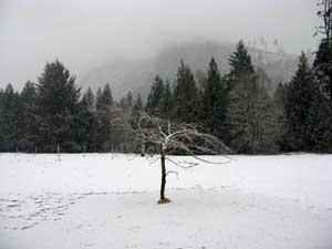 01_26_09_snow_field.jpg