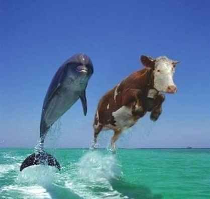 dolphin-cow.jpg