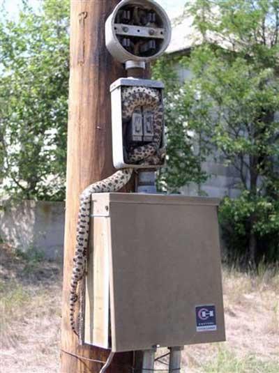 electrical_snake_02.jpg