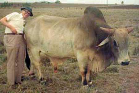 hayek_inflationbull.jpg