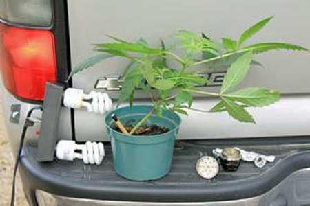 marijuana_grow_op_la.jpg