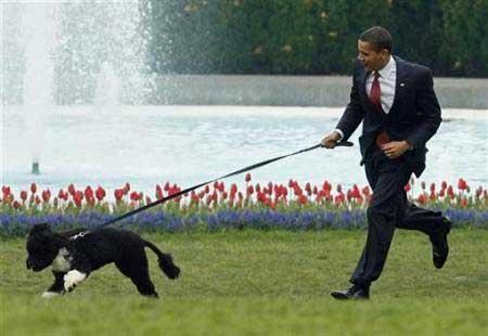 obama_bo_03.jpg