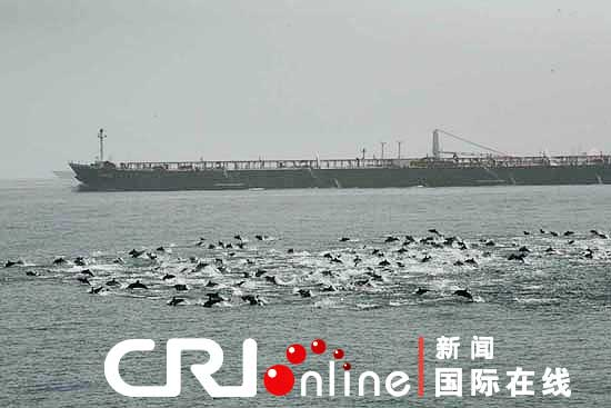 xinhua_dolphins.jpg