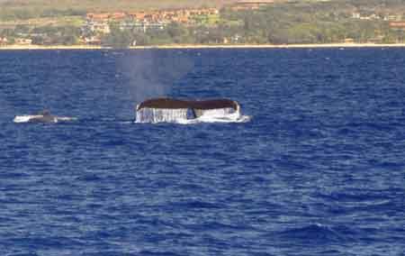 whale_01.jpg