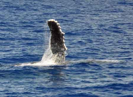 whale_03.jpg