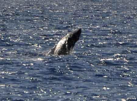 whale_04.jpg
