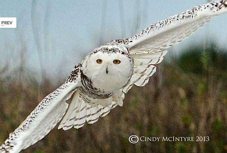 20140105-florida-owl.jpg