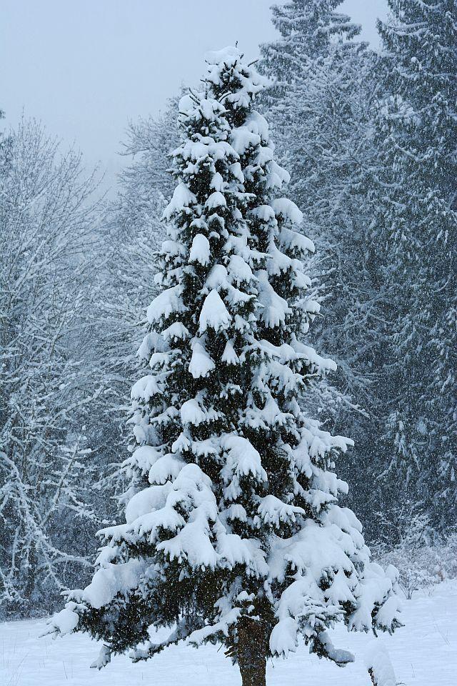 20140223-snow02.jpg