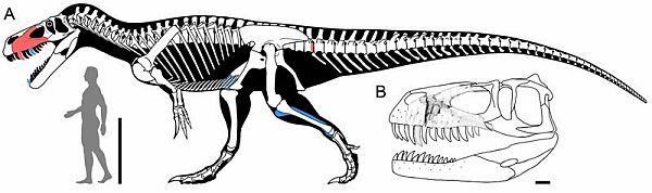 20140306-Torvosaurus.jpg