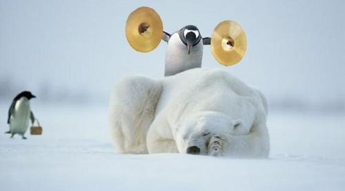 Synthstuff - music, photography and more...: Penguins at the North ...