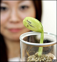 bean-plant.jpg