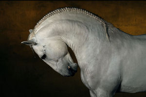 bertrand-horse.jpg