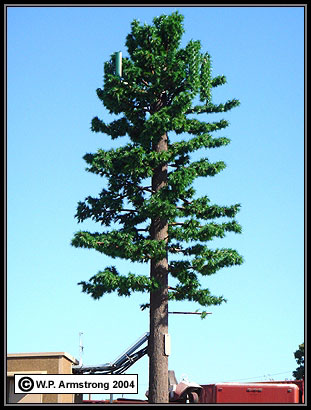 cell-phone-tree.jpg