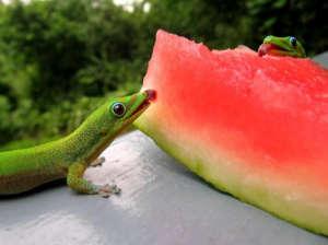 cute-overlord-gecko.jpg