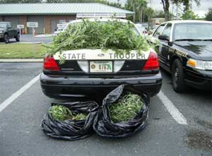 florida_highway_cleanup_pot.jpg