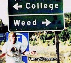 funny-signs-weed.jpg