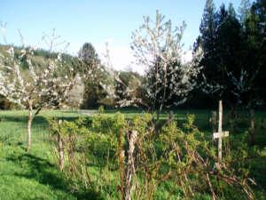 garden-05-2006-03.jpg