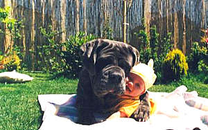 maggies-farm-big-dog-baby.jpg