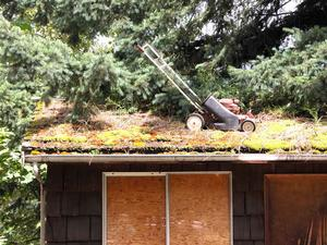 mossy-roof.jpg