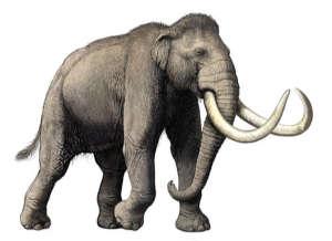 olduvai-elephant-02.jpg