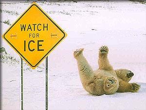 polar_bear_slip.jpg