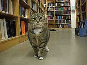 powells_fup_shopcat.jpg