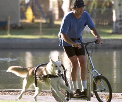urban-mushing.jpg
